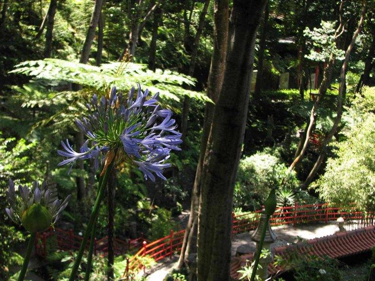 291117_Funchal_cote_jardin_1