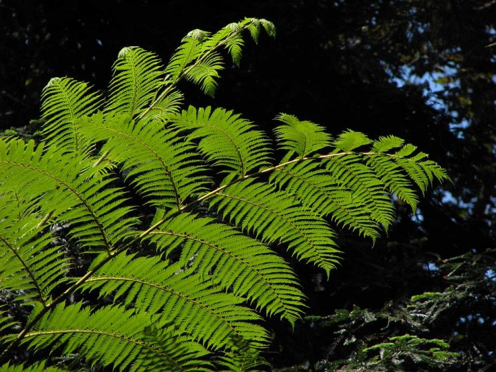 291117_Funchal_cote_jardin_11