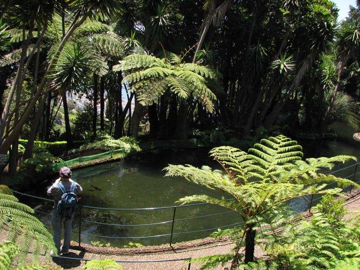 291117_Funchal_cote_jardin_13