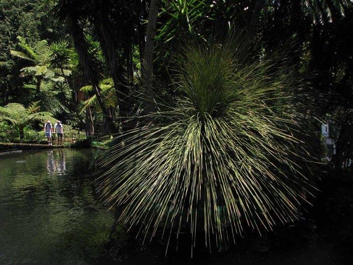 291117_Funchal_cote_jardin_2
