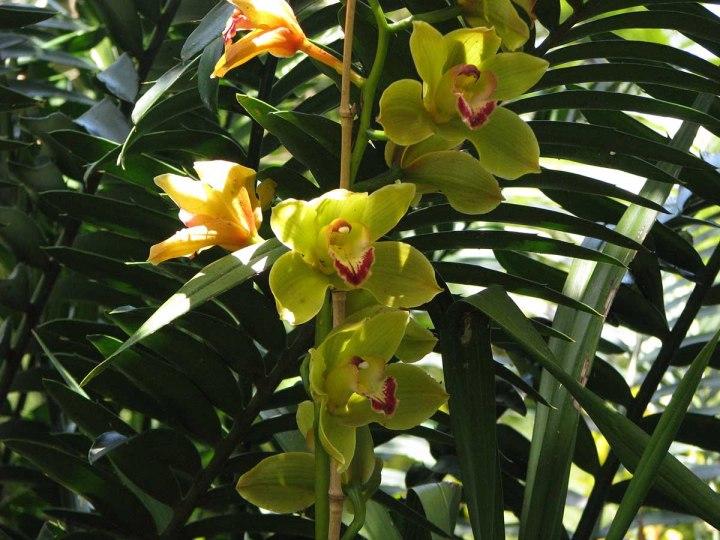 291117_Funchal_cote_jardin_22