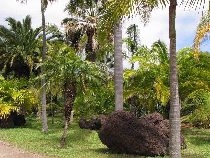 291117_Funchal_cote_jardin_33