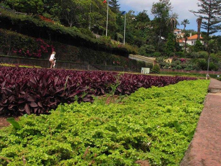 291117_Funchal_cote_jardin_34