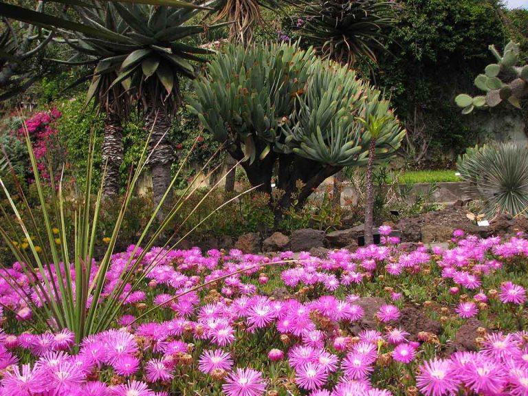 291117_Funchal_cote_jardin_36