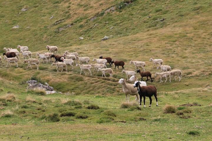 #UnJourDesTextes – Le berger, les randonneuses et les 20rebelles