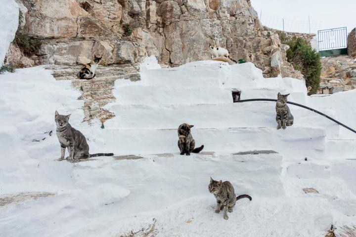 chats de Panagia Chozoviotissa - Amorgos