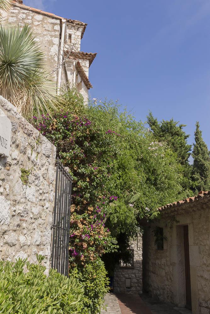 Un_jardin_Ezotique_1